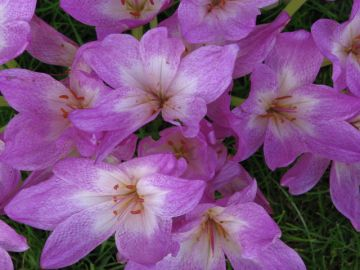 Keep the Color Going with Fall Blooming Plants